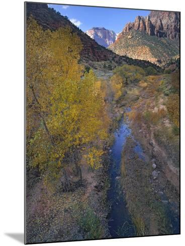 Sunset at West Temple and Pine Creek, Zion National Park, Utah-Tim Fitzharris-Mounted Photographic Print