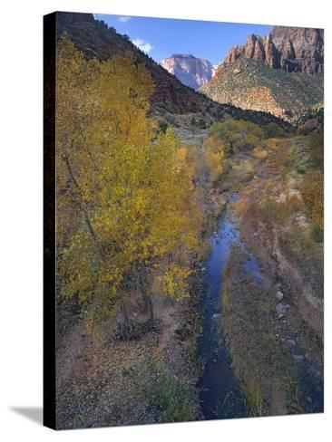 Sunset at West Temple and Pine Creek, Zion National Park, Utah-Tim Fitzharris-Stretched Canvas Print