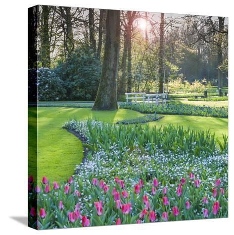 Sunlit Woodland Garden with Tulips-Anna Miller-Stretched Canvas Print