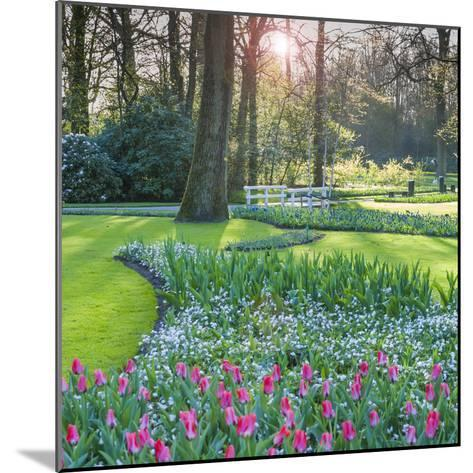 Sunlit Woodland Garden with Tulips-Anna Miller-Mounted Photographic Print