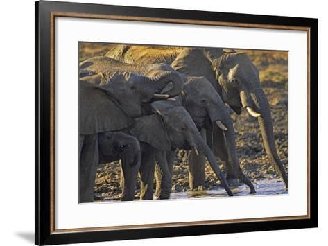 African Elephants Drinking from a Waterhole, Kenya, Africa-Tim Fitzharris-Framed Art Print