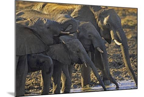 African Elephants Drinking from a Waterhole, Kenya, Africa-Tim Fitzharris-Mounted Photographic Print