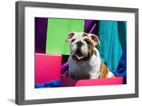 Bulldog Puppy Sitting in Colorful Box-Zandria Muench Beraldo-Framed Art Print