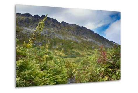 Alaska, Hatchers Pass-Savanah Stewart-Metal Print