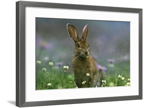 Snowshoe Hare, Ontario, Canada-Tim Fitzharris-Framed Art Print