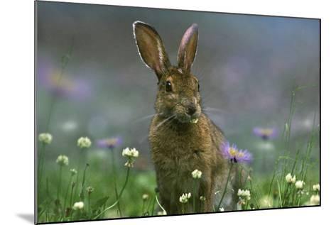 Snowshoe Hare, Ontario, Canada-Tim Fitzharris-Mounted Photographic Print