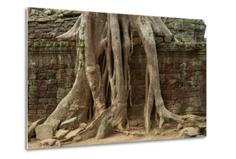 Tree Roots Growing over Ta Prohm Temple Ruins, Angkor World Heritage Site, Siem Reap, Cambodia-David Wall-Metal Print