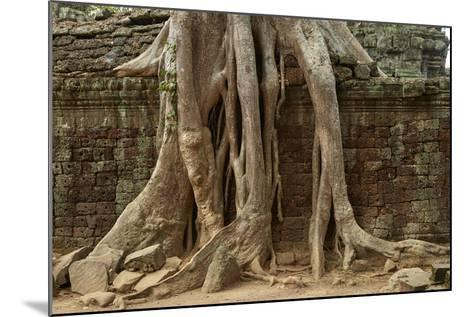 Tree Roots Growing over Ta Prohm Temple Ruins, Angkor World Heritage Site, Siem Reap, Cambodia-David Wall-Mounted Photographic Print