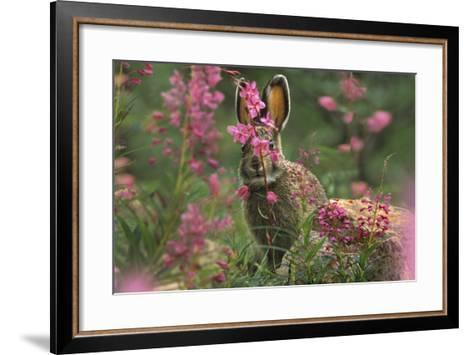 Snowshoe Hare, Alaska, Usa-Tim Fitzharris-Framed Art Print