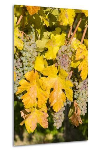 Vineyards Near Village Spitz in Wachau, Austria-Martin Zwick-Metal Print