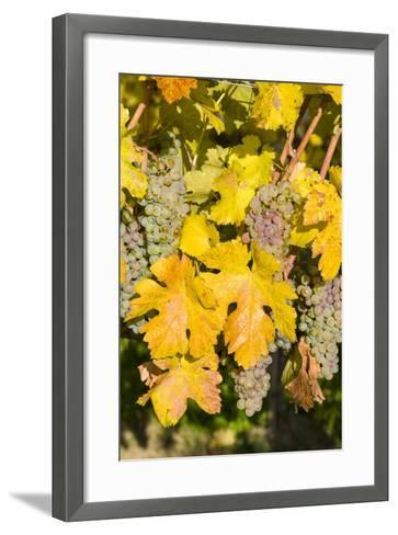 Vineyards Near Village Spitz in Wachau, Austria-Martin Zwick-Framed Art Print