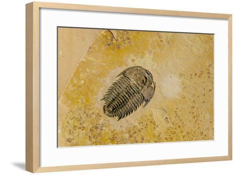 Fossils at Dinosaur Discovery, Johnson Farm, St. George, Utah-Michael DeFreitas-Framed Art Print