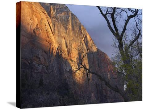 Autumn Light in Zion Canyon, Zion National Park, Utah-Tim Fitzharris-Stretched Canvas Print