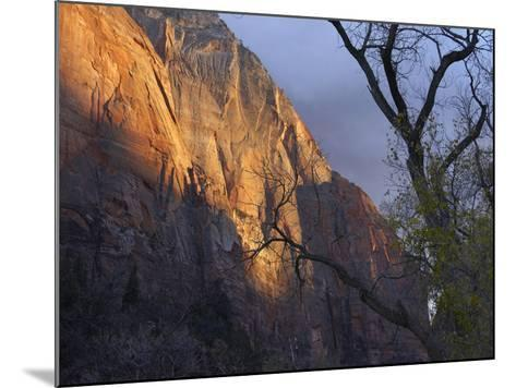 Autumn Light in Zion Canyon, Zion National Park, Utah-Tim Fitzharris-Mounted Photographic Print