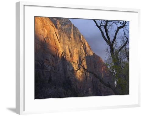 Autumn Light in Zion Canyon, Zion National Park, Utah-Tim Fitzharris-Framed Art Print