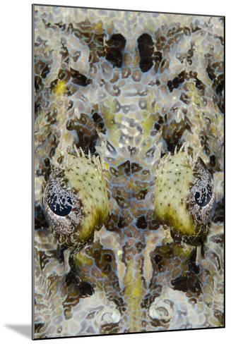 Indonesia, West Papua, Cenderawasih Bay. Close-Up of Crocodilefish-Jaynes Gallery-Mounted Photographic Print