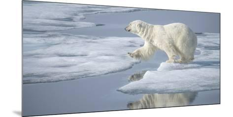 Arctic Ocean, Norway, Svalbard. Polar Bear Jumping-Jaynes Gallery-Mounted Photographic Print