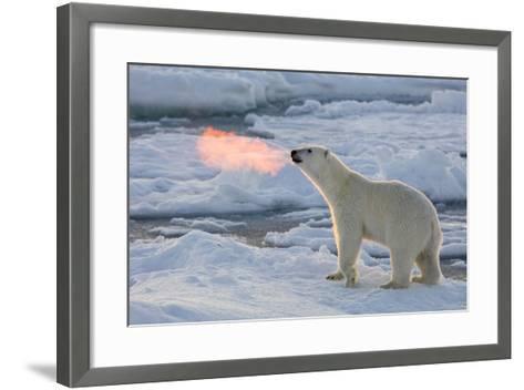 Norway, Svalbard, Spitsbergen. Polar Bear with Backlit Breath-Jaynes Gallery-Framed Art Print