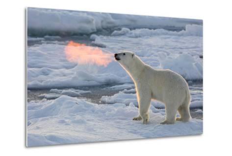 Norway, Svalbard, Spitsbergen. Polar Bear with Backlit Breath-Jaynes Gallery-Metal Print