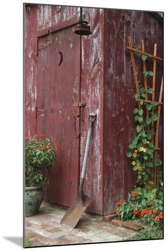 Outhouse Garden Shed Nasturtium Tropaeoium Majus and Thunbergia Lemon Star-Richard and Susan Day-Mounted Photographic Print