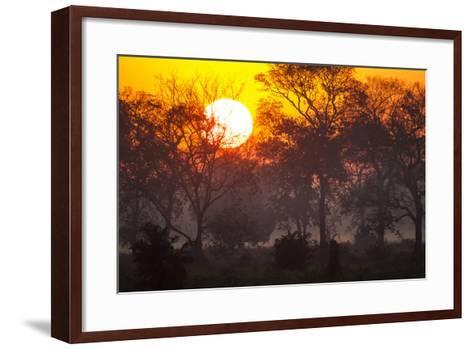 Brazil, Mato Grosso, the Pantanal, Pouso Alegre. Sunset Through Ipe Trees-Ellen Goff-Framed Art Print