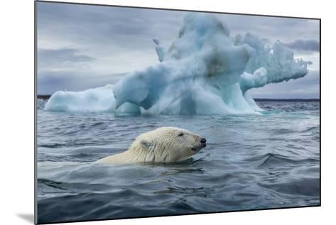 Polar Bear Swimming Past Melting Iceberg Near Harbor Islands,Canada-Paul Souders-Mounted Photographic Print