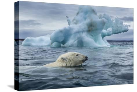 Polar Bear Swimming Past Melting Iceberg Near Harbor Islands,Canada-Paul Souders-Stretched Canvas Print