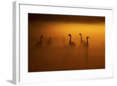 Canada Geese, Misty Dawn-Ken Archer-Framed Art Print