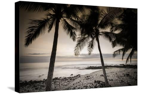 Coconut Palms and Surf at Dusk, Kailua-Kona, Hawaii, Usa-Russ Bishop-Stretched Canvas Print