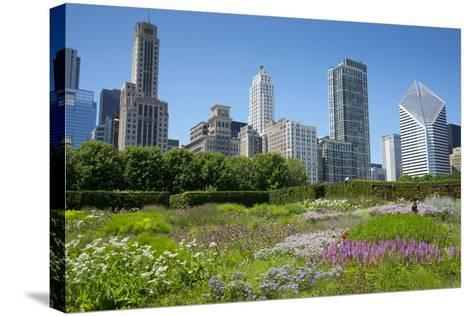 Lurie Garden in Millennium Park, Chicago, with Michigan Avenue Skyline-Alan Klehr-Stretched Canvas Print