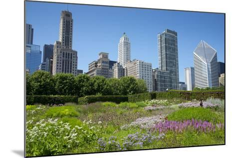 Lurie Garden in Millennium Park, Chicago, with Michigan Avenue Skyline-Alan Klehr-Mounted Photographic Print