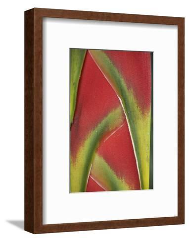 Close-Up of Heliconia, Costa Rica-Tim Fitzharris-Framed Art Print