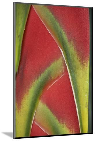 Close-Up of Heliconia, Costa Rica-Tim Fitzharris-Mounted Photographic Print