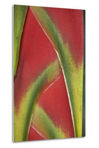 Close-Up of Heliconia, Costa Rica-Tim Fitzharris-Metal Print