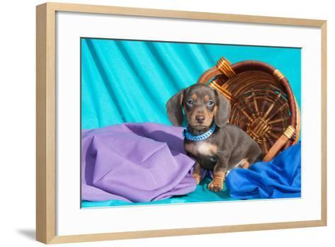 Doxen Puppy Posing-Zandria Muench Beraldo-Framed Art Print