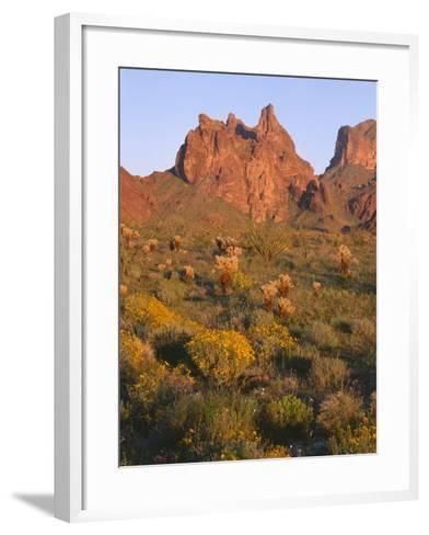Arizona, Evening Light on Brittlebush-John Barger-Framed Art Print