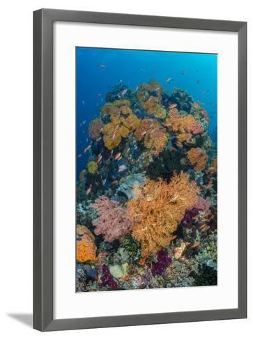 Indonesia, West Papua, Raja Ampat. Coral Reef and Fish-Jaynes Gallery-Framed Art Print