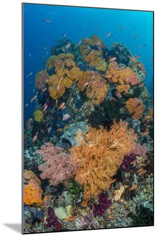 Indonesia, West Papua, Raja Ampat. Coral Reef and Fish-Jaynes Gallery-Mounted Photographic Print