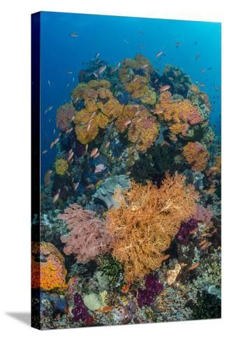 Indonesia, West Papua, Raja Ampat. Coral Reef and Fish-Jaynes Gallery-Stretched Canvas Print