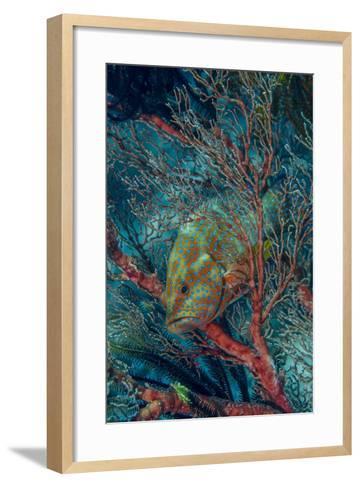 Indonesia, West Papua, Raja Ampat-Jaynes Gallery-Framed Art Print