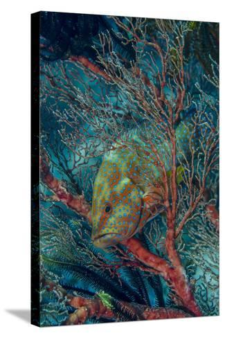 Indonesia, West Papua, Raja Ampat-Jaynes Gallery-Stretched Canvas Print
