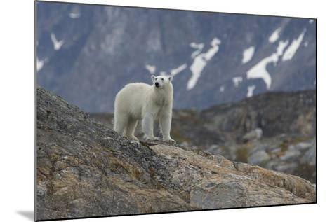 Europe, Norway, Svalbard. Polar Bear Walks across a Rocky Terrain-Jaynes Gallery-Mounted Photographic Print