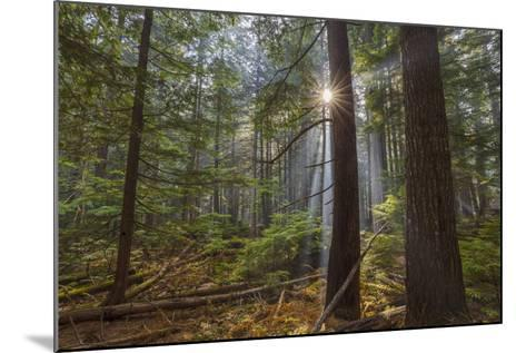 Sun Rays Penetrate Forest Floor at Ross Creed Cedar Grove in Kootenai National Forest, Montana-Chuck Haney-Mounted Photographic Print