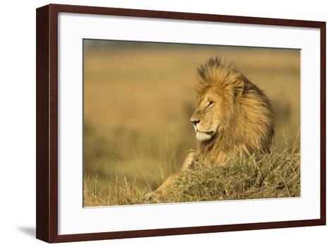 Adult Male Lion Resting on Termite Mound, Masai Mara, Kenya-Adam Jones-Framed Art Print