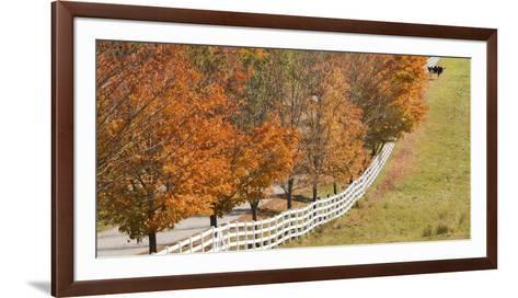 Maine, Pownal. Fenceline and Cow-Jaynes Gallery-Framed Art Print