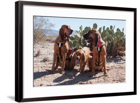 Search and Rescue Bloodhounds in the Sonoran Desert-Zandria Muench Beraldo-Framed Art Print