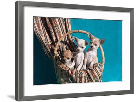 Chihuahua Puppies in a Basket-Zandria Muench Beraldo-Framed Art Print