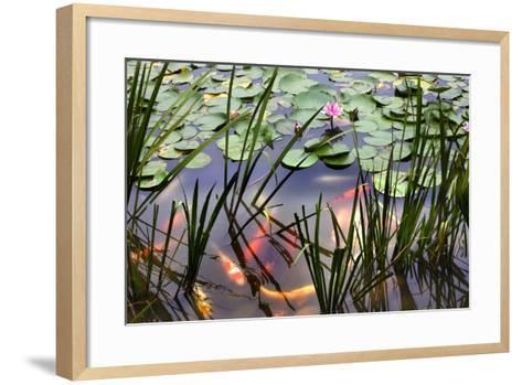 Orange White Carp Fish Pink Water Lily Pond Chengdu Sichuan, China-William Perry-Framed Art Print