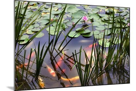 Orange White Carp Fish Pink Water Lily Pond Chengdu Sichuan, China-William Perry-Mounted Photographic Print