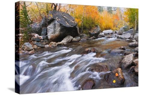 Fresh Snow on Aspens Along Bishop Creek, Inyo National Forest, California-Russ Bishop-Stretched Canvas Print